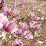 TRE_Arboretum, spring_2JH