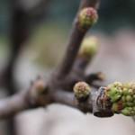 TRE_Arboretum, spring_3LKH