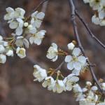 TRE_Arboretum, spring_4PL
