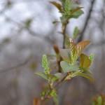 TRE_Arboretum, spring_9PL