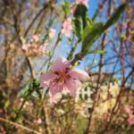 TRE_Arboretum, spring_new sliderimage