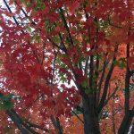 fall-gallery-1