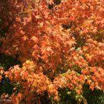 fall-gallery-2