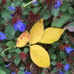 fall-gallery-4