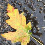fall-gallery-6