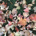 fall-gallery-7
