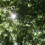 0406 Arboretum inside 1