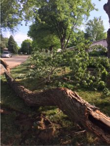 Downed tree – 90th & Center