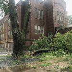 0820 tree damage in North Omaha IMG_1395