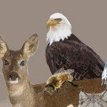 ENV_Wildlife_homepage