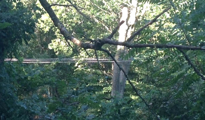 OUT_Downed Lines, tree branch in line