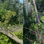 7132021_Tree Damage Examples