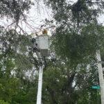 7142021_SIZED Bucket in Big Trees along Underwood